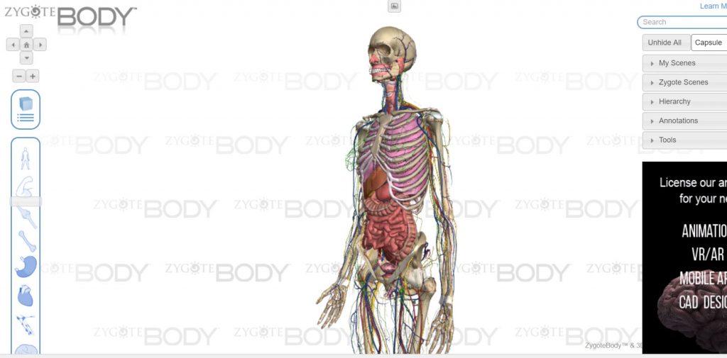 İnsan Anatomisini Keşfedin